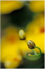 4 _ flower show _ 1v _ EF100mm _ macro _ RVP50 (wung0317) Tags: show flower macro 1v rvp50 ef100mm