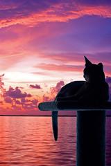 Mauve Gita (key lime pie yumyum) Tags: pink sunset sky water cat colorful tropical keywest abyssinian tropics