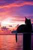 Mauve Gita (key lime pie yumyum) Tags: pink sunset sky water cat colorful tropical keywest abyssinian tropics