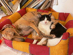Hugs / Abrazos (Marianne Perdomo) Tags: sleeping dog cat eli perro together gato humphrey elisa juntos durmiendo galgo animaladdiction safe200