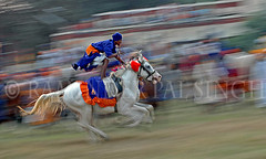 Pan Stand (Raminder Pal Singh) Tags: blue horse india motion blur color history dedication festival costume community order power exercise faith authority religion ceremony belief pride run pan concept tradition punjab tribe rider amritsar leadership bold stunt majesty customs fearless gallop skill khalsa nagas organisation headgear egotism caste maneuver suicidesquad nihang akalis unrestrained thpca abigfave gurugobindsingh abigfive akalpurkh gosains sikhwarrior