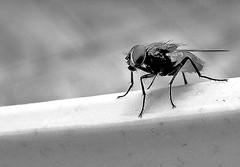 Fly (expatty) Tags: deleteme5 deleteme8 deleteme deleteme2 deleteme3 deleteme4 deleteme6 deleteme9 deleteme7 fly deleteme10