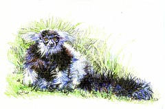 Postcards for the Lunch bag - B&W Ruffled Lemur (molossus, who says Life Imitates Doodles) Tags: postcardsforthelunchbag lemur fineliners animal nature