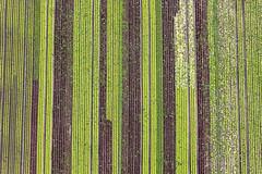 Lettuce Heads (Aerial Photography) Tags: by m obb 19072010 1ds54191 ackerbau bauernmalerei bavaria bayern braun deutschland farbe feld feldmoching fotoklausleidorfwwwleidorfde fotoklausleidorfwwwleidorfaerialcom gemüse gemüsefeld germany grafik grün landscapeandnature landschaft landschaftnatur landwirtschaft linien luftaufnahme luftbild munich münchen p1 region reihen salat salatfeld abstract abstrakt aerial agriculture brown color colour farmerspainting field graphicart graphics green landscape landscapenature lines nature outdoor rows verde bayernbavaria deutschlandgermany deu