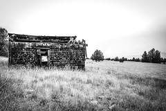 County Road 48, Davis Creek, California (paccode) Tags: solemn shack landscape blackwhite quiet california scary abandoned barn tree modoc grass alone serious d850 creepy antique forgotten monochrome field daviscreek unitedstates us