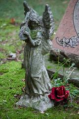 Culver's Angel (Just Say Jules!) Tags: cemetery graveyard summer imagraveyardkindofgirl tombstones oakgrovecemetery stlouismichigan angel roses