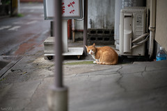 猫 (fumi*23) Tags: ilce7rm3 sony 85mm fe85mmf18 sel85f18 a7r3 emount cat chat katze gato animal neko bokeh street alley dof ねこ 猫 路地 ソニー