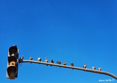 a break in the fly (Feches) Tags: pigeons palomas pájaros birds sky blue semáforo trafficlight nido nest rest descanso line fila queue