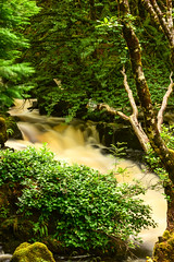 Aros Park Waterfall (Baldyal) Tags: water waterfall tree landscape tobermory isleofmull scotland