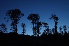 Trees - blue hour (Marek vono) Tags: drzewa niebieskagodzina sachódsłońca góry wycieczka noc drzewo góryopawskie trees bluehour sunset mountains trip night tree opawskiemountains