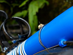 IMG_4094a (Photopedaler) Tags: cornishcycling bicycle snails