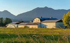 Sunrise Farm (Paul Rioux) Tags: chilliwack bc fraservalley country rural agriculture agricultural barn farm grass mountains blue sky morning sunrise glow prioux
