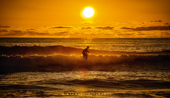 Golden Age of Surfing (Mike Filippoff) Tags: cardiff cardiffbythesea sandiego shoreline sunset clear surfing water waves surfer golden sun glow wavesshoreline losolas ngc sky sea pacific ocean wave