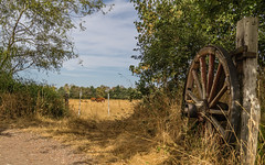 Country scene (Smeets Paul (thanks for 2,3 million views)) Tags: country summer field wheel