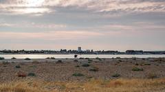 Hayling Island -E7210152 (tony.rummery) Tags: beach beachcomber em10 evening haylingisland mft microfourthirds omd olympus seascape shingle solent southcoast street havant england unitedkingdom gb
