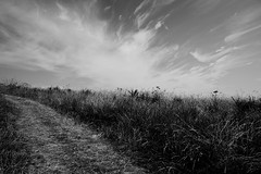 Off the Beaten Track (JamieHaugh) Tags: sidmouth devon england uk gb greatbritain outdoors sony alpha zeiss a7rii ilce7rm2 black white monochrome bw track pathway trail clouds sky hay grass undergrowth nature landscape lonely quiet mood atmosphere day blackwhite blackandwhite