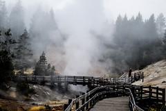 Mud Volcanic Area (Beangrau12) Tags: mudvolcanicarea yellowstonenationalpark bridges tree geyser sulfur trees trail landscape