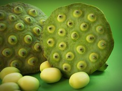 Lotus seeds green on Isolated (www.icon0.com) Tags: lotus seed flower leaf pod indian closeup isolated produce aquatic natural agriculture tropical green dessert white river sweet herbal organic waterlily east lake asia medicine vegetable macro flora round up care group close plant ingredient seedpod fruit beautiful background fresh water nature detail lily food nut botany asian freshness