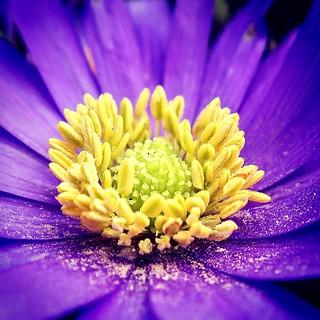 Blütenpollen-Bad