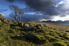 The lonely tree. (lawrencecornell25) Tags: landscape scenery scotland skye isleofskye tree nature outdoors hiking braes nikond5
