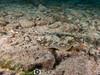 Stingray (R. Donald Winship Photography) Tags: aquaticlife cozumel divingunderwater scubaclubcozumelhousereef yellowtailstingray