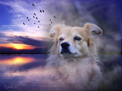 My Darling (patrick.verstappen) Tags: dog pet rusty photo nikon d7100 animal angel poster gingelom google flickr facebook belgium sigma picassa pinterest pat portrait lovely sea sunset sky texture textured портрет закат солнца прекрасный ржавый текстурированный ангел 肖像 日落 可愛 生疏 紋理 天使 retrato puesta de sol encantador oxidado texturado ángel porträt sonnenuntergang schön rostig strukturiert engel le coucher du soleil charmant rouillé texturé ange ポートレート 日没 美しい さびた テクスチャ porträtt solnedgång härlig texturerad ängel πορτρέτο δυση mydarling