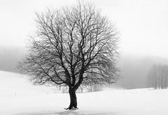 Winter Tree (Christoph Wenzel) Tags: winter natur neuhausamrennweg thüringen de schnee nebel deutschland sonyalpha6000 blackandwhite sonysel35mmf18oss bw landschaft baum