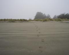 DSC08646 (GusTheArtist) Tags: yescoast scrp sonomacounty regionalparks pacificcoast doran doranbeach ocean beach