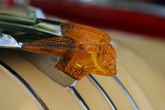 Face of Pontiac (imagetaker!) Tags: face head mascot carornaments pontiacsaloon1954 pontiacsaloon worldcars oldcars carphoto ukcars classiccarshows carshows englishclassictransport englishclassiccarshows classicautos classicautomobiles britishtransportimages peterbarker petebarker transportimages englishcarshows motorcarimages carimages motorimages transportphotos transportpictures transportphotography classiccars classicmotors carphotography carpictures realcars britishcarshows festivaloftransport picturesofcars photographsofcars photosofcars worldofcars carsoftheworld fotosofcars fotosofmotorcars motorcarfotos carfotos yorkshirerepublic imagesinlife 中高級轎車 老爺車 經典機動車 imagetaker imagetaker1 cars car automobiles autos rides americanmotorcars americancars madeintheusa pontiac carstatues hoodornaments artdecor hoodmotifs carfurnisher carmotifs metalart carart caremblems artonacar carmascot