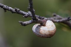 Connection (Mrs. shooting) (Ivona & Eli) Tags: closeup nature shell snail bush branches macro