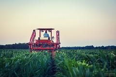 Castration de maïs semence (- Olivier B. - Entre terres et ciel -) Tags: maïs semence castration vermande enjambeur automoteur écimeuse canon 5dmkii 100400 olivierb entreterresetciel