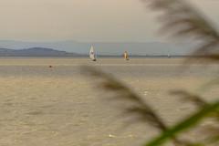 the sailboats at the Neusiedlersee (a7m2) Tags: grenze ungarn weidenamsee neusiedlamsee burgenland austria steppensee urlaub travel tourismus wassersport segeln surfen schwimmen