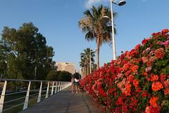 Puente de las flores (J.G.Sansano) Tags: puente flores geranios street streetphotography fotografíacallejera g7xii