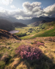 blea tarn haze (akh1981) Tags: amateurphotography heather beautiful bleatarn cumbria clouds calm countryside valley travel trees wideangle walking landscape lakedistrict langdale outdoors manfrotto mountains nikon nature nisi nationalpark nisifilters nationalheritage nationaltrust uk unesco