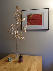 Nature Morte (Drew Makepeace) Tags: kitchen table plant succulent photograph frame cube origami box