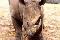 IMG_0830 (Bob_lewerissa) Tags: wildlands emmen zoo canon 80d 70200 l nonis usm