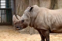 IMG_0801 (Bob_lewerissa) Tags: wildlands emmen zoo canon 80d 70200 l nonis usm