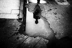 Splash 331.365 (ewitsoe) Tags: 50mm canoneos6dii ewitsoe street warszawa erikwitsoe summer urban warsaw mono monochrome blackandwhite bnw city refelction puddle reflection man shadows walking ominous dread sky clouds