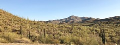 Tucson, AZ (- Adam Reeder -) Tags: fountain carmirror suspensionbridge windowscreen y2018 m06 d06 lat320 lon1110 the reserve saguaro park pima arizona united states photo jpg apple iphone x tucson az snowmobile lakeside picketfence chainlinkfence gordonsetter dogsled tree sky mountain