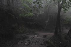 1DSC_4957 (Radu Pavel) Tags: radu radupavel pavel fotononstop cosmos ©radupavelallrightsreserved ©radupavelallerechtevorbehalten ©radupaveltodoslosderechosreservados ©radupavel版権所有 forest wald bosque 森林 mist nebel niebla 霧 outdoor alairelibre imfreien ルーマニア nature natur naturaleza 自然 mountains gebirge montañas 山岳 travel reisen viaje 旅行 landscape landschaft paisaje 風景 world welt mundo 世界 ecotourism hiking wandern explore carpați carpathians karpaten cárpatos 喀尔巴阡山脉 bucegi butschetsch 布切吉山脈 românia romania rumänien rumania 羅馬尼亜 2013 path weg camino 道