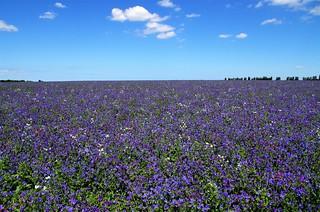 Purple horizons.