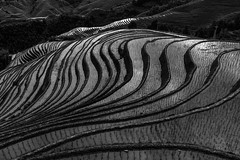 Reflections in rice paddies (GLVF) Tags: dazhai longsheng guangxi china riz rice chine rizière paddy paddies reflections reflet layers thousand heaven music from paradise blackwhite blackandwhite black bw nb noirblanc noiretblanc noir blanc white pattern plant agriculture