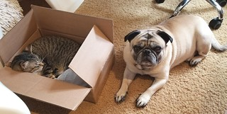 This is NOT the puppy I ordered