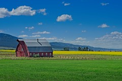 Barn Yellow Field 9353 A (jim.choate59) Tags: on1pics jchoate barn field rural agriculture josephoregon d610 fence