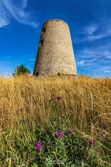 Wild flowers at the Windmill (robinta) Tags: cleadonhills england southtyneside meadow flowers summer ngc architecture windmill ruin landmark historic building canon 200d canon1018mm