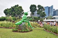 Flower Field (chooyutshing) Tags: flowerfield singaporegardenfestival2018 themeadow gardensbythebay baysouth marinabay singapore