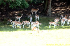 IMG_7360 (Patrick Williot) Tags: hansurlesse han lesse parc animalier safari