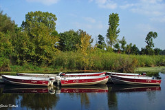Rental Boats at Chain O'Lakes State Park (GerdaKettner) Tags: rentalboats boats midwest illinois stateparks chaino'lakesstatepark