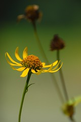 showoff (courtney065) Tags: nikond200 nature landscapes flowers blooms blossoms summer summertime summerblooms yellow green blurred foliage artistic abstract flora