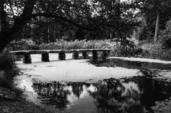 Bridge, Pond, Algae (Richie Rue) Tags: nostell priory lake pond water bridge stone path algae trees reflections landscape monochrome blackandwhite bnw bw film analogue analog ishootfilm istillshootfilm filmsnotdead staybrokeshootfilm caffenol homebrew coffee yorkshire uk england outdoors nopeople
